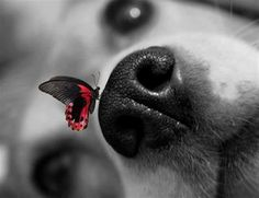 dog with butterfly on snout