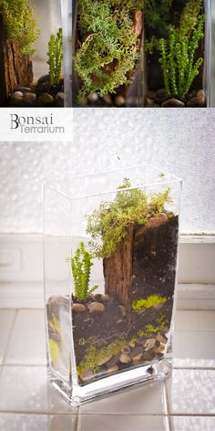Princess Pine Terrarium - yes to succulents and levels, no to wood slab