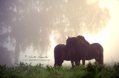Morning Mist by Anette Augestad