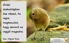 Don Miguel Ruiz gondolata az önbecsülésről. A kép forrása: Te döntésed Facebook Quotes, Buddhism, Einstein, Reflection, Thoughts, Motivation, Life, Inspiration, Don Miguel Ruiz