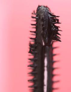 COVERGIRL Total Tease Mascara or Carnivorous Subtropical Plant? - Makeup and Beauty Blog https://link.crwd.fr/BRs