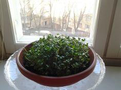 My windowgarden.