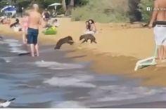 Família de ursos aproveita dia ensolarado em lago nos EUA sem se importar com a presença de humanos