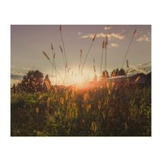 Romantic sunset in the fields (Graz Austria) Wood Wall Art Graz Austria, Wood Company, Thing 1, Wood Canvas, White Ink, Wood Wall Art, Wood Print, Holiday Cards, Fields
