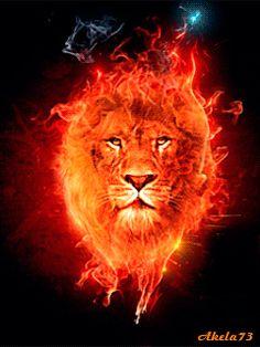 Fiery lion