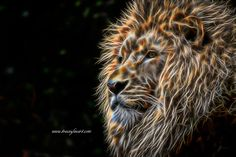 King of the Jungle - male fractal lion by Tracey Lee Art Designs. Prints and merchandise available Fractal Art, Fractals, Male Lion, Image Shows, Big Cats, Art Blog, Black Backgrounds, Fine Art America, Digital Art