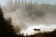 2. Aroostook National Wildlife Refuge, Caribou