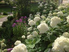 Brilliant 51 Best Color Schemes For The Cottage Garden Images In 2015 Download Free Architecture Designs Scobabritishbridgeorg