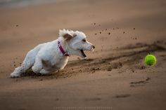 A young and adorable dog at play!