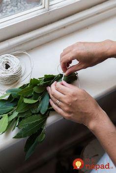 Ak máte doma túto rastlinu, namnožte si ju a dajte do každého okna aj pred dvere: Ľudia ani netušia, čo všetko dokáže!