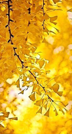 ♥ Golden Autumn
