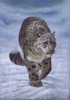 A snow leopard on the prowl in the snow. Pastel painting from Art by Karie-Ann #snow #wildlife #art