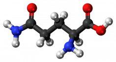 l-glutamine-amino-acid