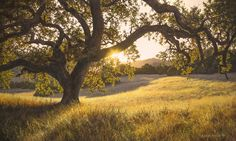 BURDELL RANCH, 18×30 (sold)