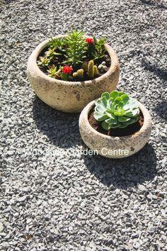 Atlantis Low Decorative Bowl Set of 2 Woodside Garden Centre, Olive Tree, Atlantis, Garden Pots, Bowl Set, Decorative Bowls, Planter Pots, Inspire, Antique