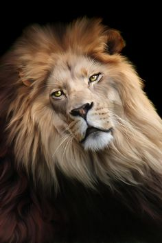 Lion Print | images of big cats | Cameron Digital Art