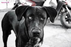 stray dog in North Cyprus