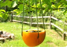 "* Cut the orange in half. Remove all of the pulp until you are left with an empty shell. Oh, and don't toss the insides.      * Thread your needle with a 2 foot length of yarn.      * Poke the needle across the shell and through the opposite side.      * Do the same thing on the other side. The goal is to make a ""cross"" through the center of the orange.      * Pull the gathered ends of yarn together and tie a knot at the end.        * Finally, fill the shell with your birdseed"