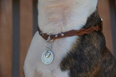 Adjustable Leather Dog Collar Necklace ID by MarlonBrandLeather