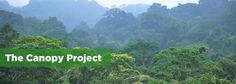 The Canopy Project focuses on planting trees in locations where reforestation is most urgently needed including Haiti, Brazil, Mexico and urban areas of the US. Get involved-for every dollar donated a tree will be planted!