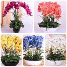 100 Pcs Qualidade Superior Sementes de Orquídeas de Alta Simulação Flor Da Orquídea do Phalaenopsis Plantas Para Jardim de Casa(China (Mainland))
