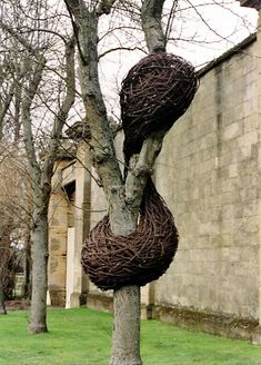 Laura Ellen Bacon, woven branches in trees