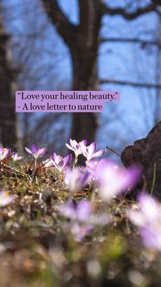 """""""Love your healing beauty."""" - A love letter to nature"""