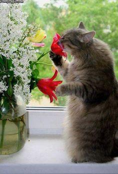 猫のきれいな画像を貼るよー(続き6):ハムスター速報