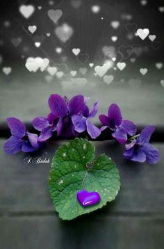 Splash of Colour Little Flowers, Purple Flowers, Spring Flowers, Purple Love, All Things Purple, Splash Photography, Color Photography, Sweet Violets, Gras