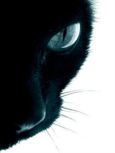Cat Perspective