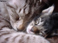Love is snuggling with a kitten...