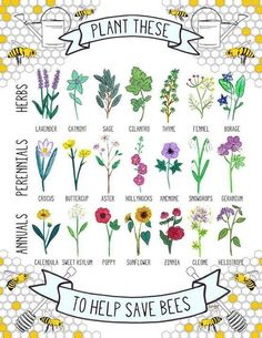 Plantings to help keep bees & their helpful to tasty functions around, as shared via Sustainable Living