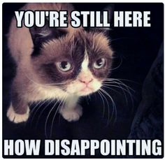Grumpy Cat - Mean Memes! Grumpy Cat Quotes, Funny Grumpy Cat Memes, Funny Animal Jokes, Cute Funny Animals, Funny Animal Pictures, Animal Memes, Cute Cats, Funny Cats, Funny Memes