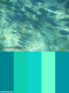 Key West Sea Themed Paint Ideas By Julianne Moore On Pinterest Color Schemes Sea Glass And