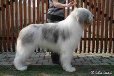 Romanian Mioritic Shepherd Dog - any color Shepherd Dog, Belle Photo, Dog Stuff, Romania, Bobby, Photos, Foods, Big, Color