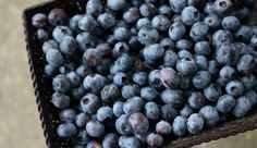 Use this method to prune blueberry bushes so you can maximize fruit set and improve production.