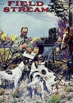 Field & Stream Cover Gallery: 43 Hunting Classics, From 1899 to 1928 Hunting Art, Hunting Dogs, Hunting Stuff, Deer Hunting, Equine Photography, Animal Photography, Wild Bull, Yellow Lab Puppies, Magazine Art