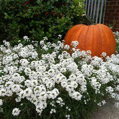 Fall planter..idea's for my rectangle planter..