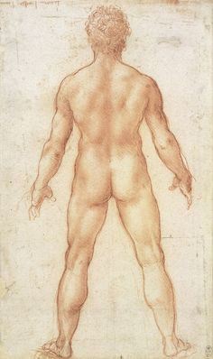Drawing of a Nude Man by Leonardo da Vinci, c1504-1506.