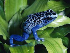 Galería | Las ranas más extrañas -Muy Interesante México