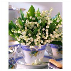 My favorite flower....in a teacup!!!!