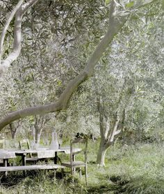 Bucolic French countryside with rustic farm table and chairs under tree. European Farmhouse and French Country Decorating Style Photos. Landscape Design, Garden Design, Boho Home, Olive Gardens, Tree Wedding, Field Wedding, Wedding Table, Wedding Reception, Wedding Ideas