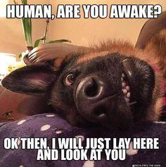 Funny Animal Jokes, Funny Dog Memes, Cute Memes, Cute Animal Humor, Clean Animal Memes, Dog Funnies, Funny Friday Memes, Dog Humor, Memes Humor