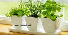 O niektorých rastlinách sa verí, že okrem skrášľovania vedia aj pozitívne vplývať na rôzne energie. Pozrite sa, čo všetko vraj dokážu.