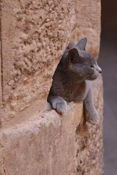 Cats In Ancient Egypt, Egypt Cat, Adorable Kittens, Cute Cats, What Time Is, Auras, Beautiful Cats, Cats And Kittens, Bunnies