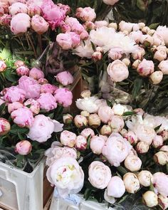 Woke up early to grab some peonies. At 10 for two bunches why not? And now my flat smells oh so lovely!