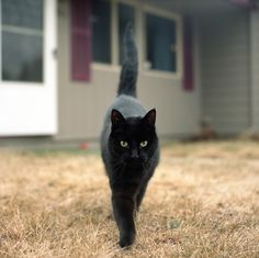 The quintessential black cat and . . .
