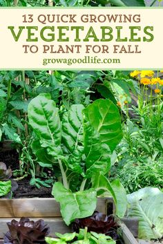 Fall Vegetables To Plant, Garden Plants Vegetable, Fall Plants, Growing Vegetables, Growing Plants, Home Vegetable Garden Design, Veggie Gardens, Gardening Vegetables, Growing Tomatoes