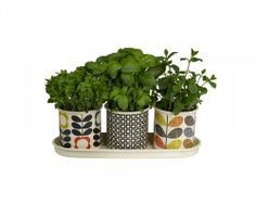 Orla Kiely Herb Pots Three vibrant enamel pots featuring Orla's recognisable prints; daisy spot in charcoal, scribble stem and flower stem, which sit neatly in an enamel tray for growing herbs and small plants. Great for window sills and patio gardens Herb Planters, Herb Pots, Garden Pots, Planter Pots, Herb Garden, Garden Ideas, Garden Shop, Ceramic Planters, Indoor Garden