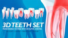3D Teeth Set (Medical) #Envato #Videohive #aftereffects